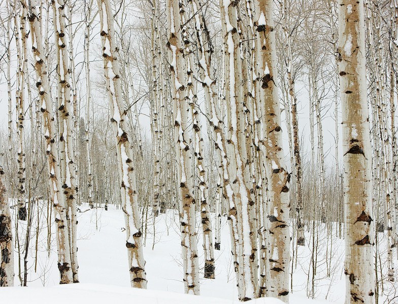 WInter Aspens 4