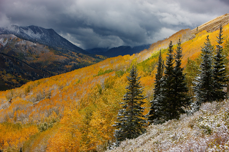 Fall in Big Cottonwood
