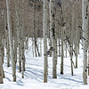 Aspens Big Cottonwood