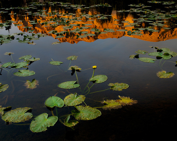 Lilly Reflection