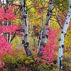 Wasatch Fall Colors