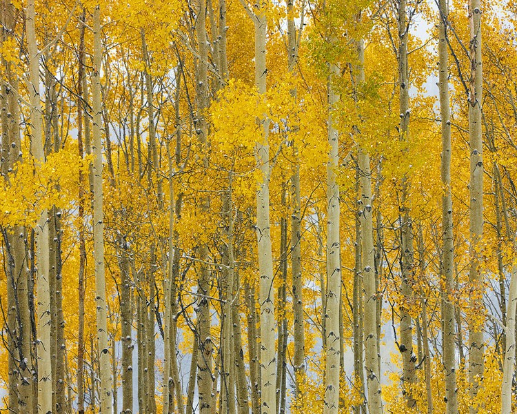 Elements of the Season