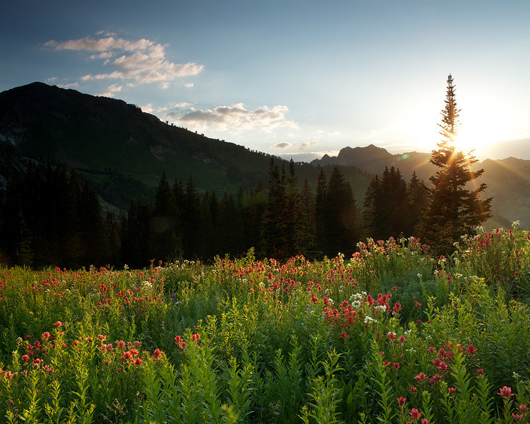Albion Basin Summer Flare