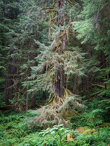 Olympic National Park 442