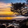 107  G Beach Sunset Tree