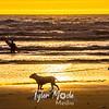 27  G Surfer and Sunset Dog