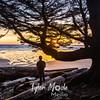 94  G Beach Sunset Tree and Cody