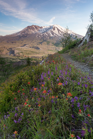 We continued north into Washington state to photograph the wildflowers at Mount Saint Helens.