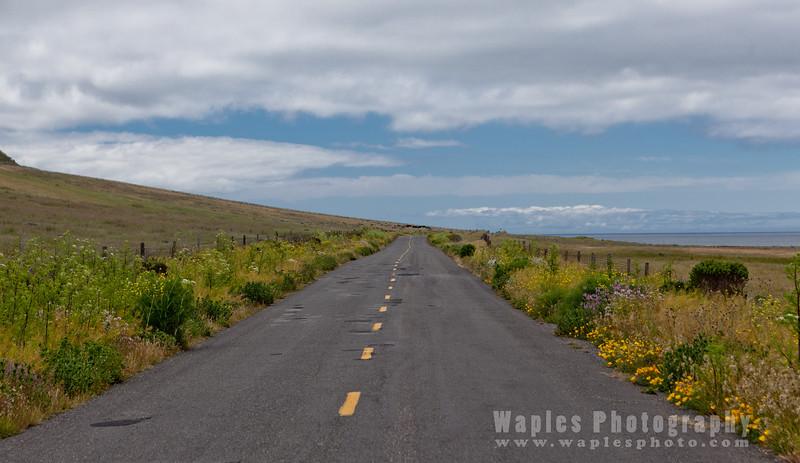 Oregon-Redwood-7591