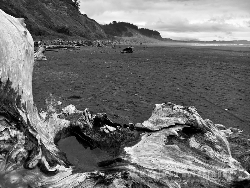 Oregon-Redwood-1460