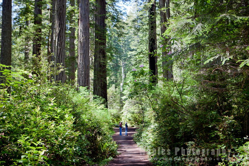 Oregon-Redwood-7408