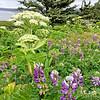 Oregon-Redwood-1446