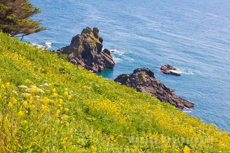 Oregon-Redwood-8110