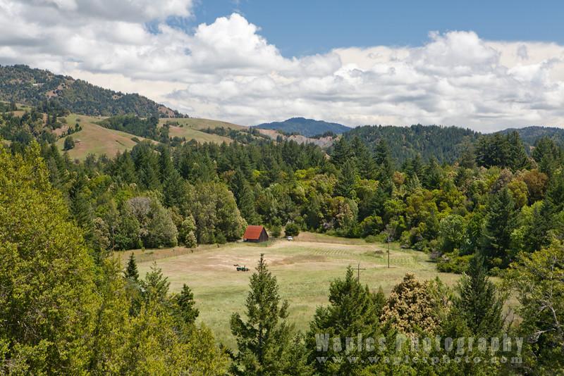 Oregon-Redwood-7620