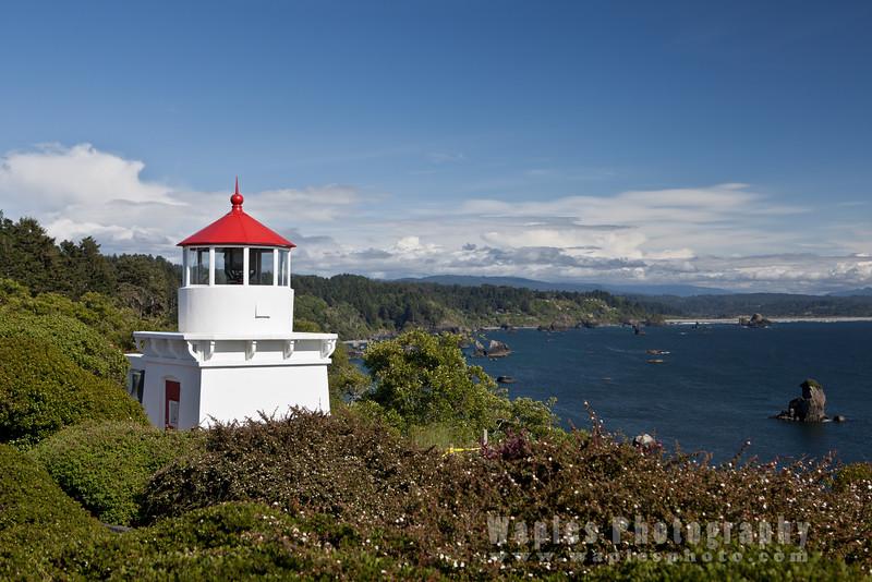 Oregon-Redwood-7482