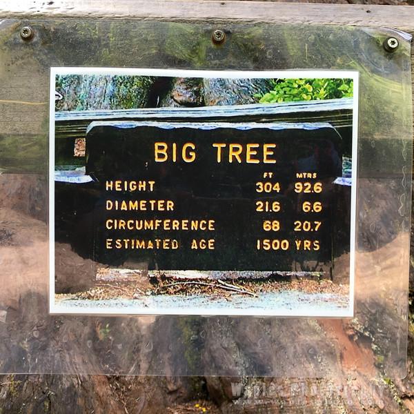 Oregon-Redwood-1593