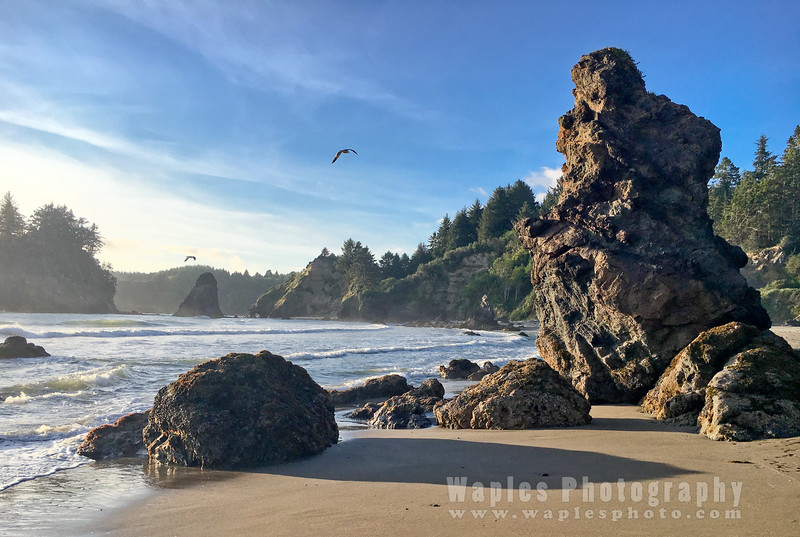 Oregon-Redwood-1700