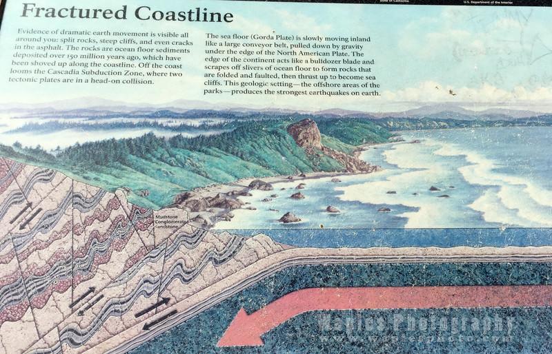 Oregon-Redwood-1547