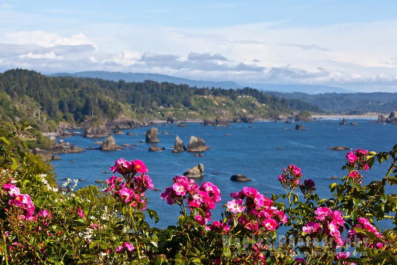 Oregon-Redwood-7518