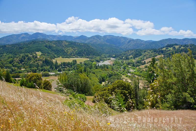 Oregon-Redwood-7621