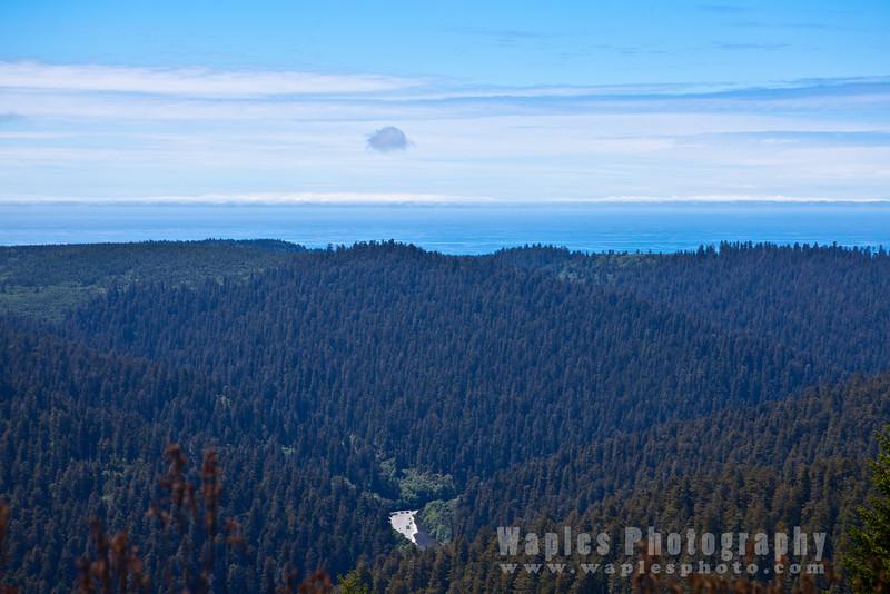 Oregon-Redwood-7375