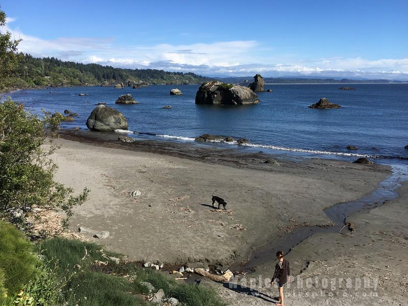 Oregon-Redwood-1641