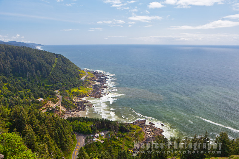 Oregon-Redwood-8063
