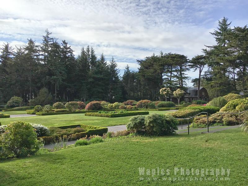 Oregon-Redwood-1394