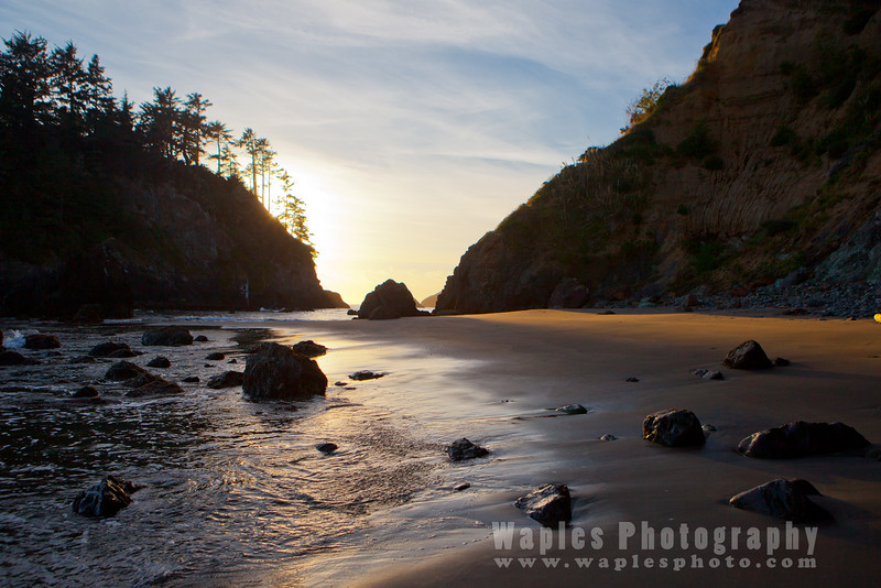 Oregon-Redwood-7646
