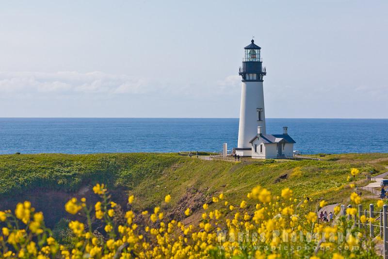 Oregon-Redwood-8109
