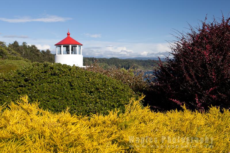 Oregon-Redwood-7503