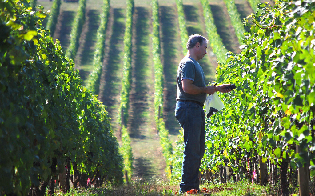 Winemaker TonyRynders samples pinot noir during the 2008 Willamette Valley harvest.