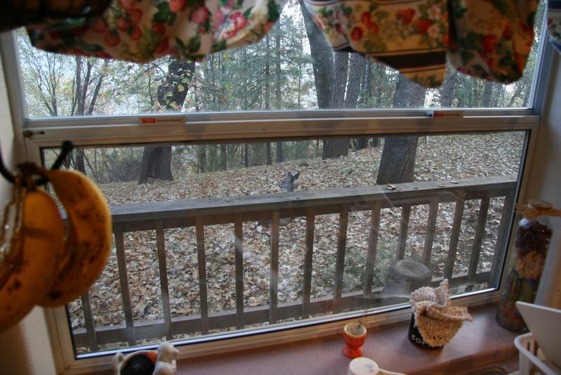 Deer out moms kitchen window kicking back