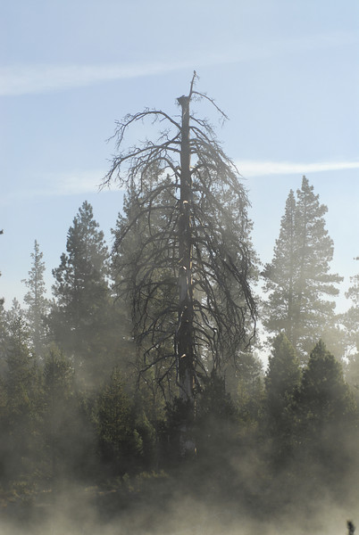 Osprey nest, Deschutes River
