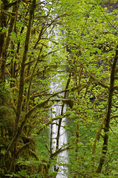 Trees&Falls