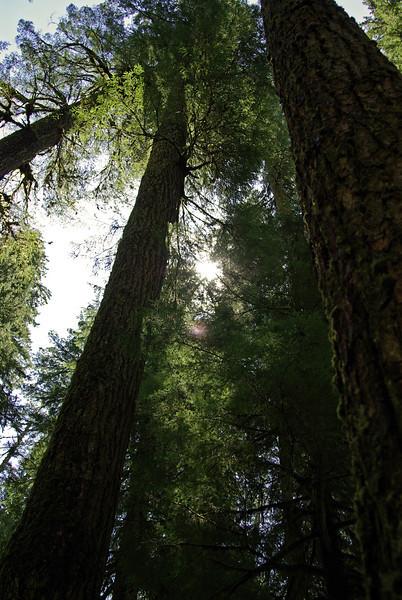 Opal Creek - Up thru the trees