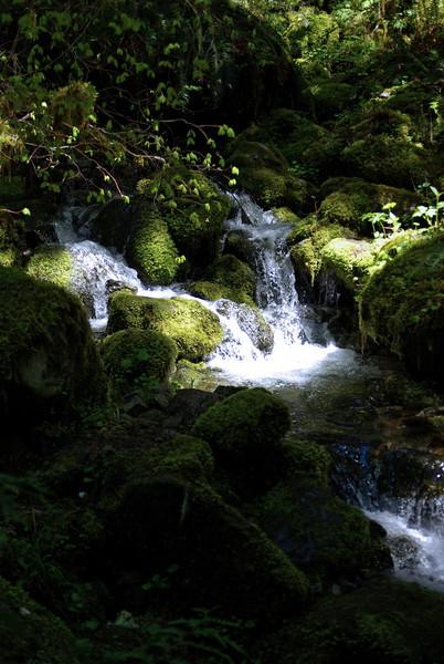 filter stream to Opal Creek