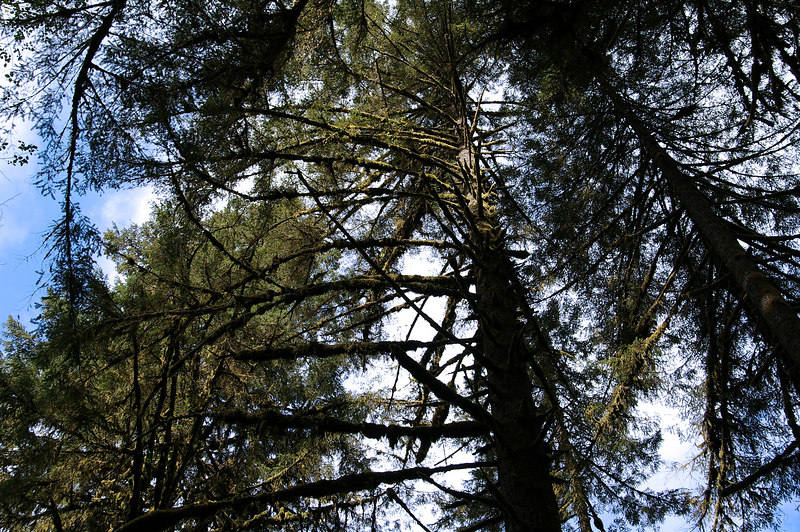 Trees2Sky