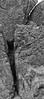 Redwoods - Bandon OR-052813-1166-Edit