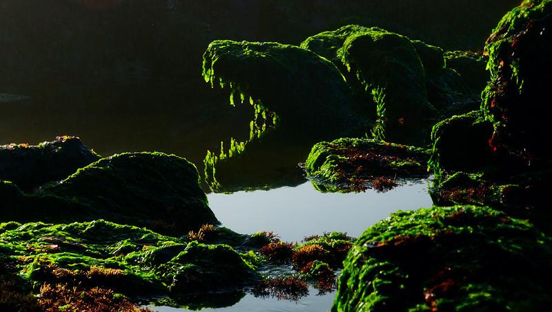 Seal Rock, low tide