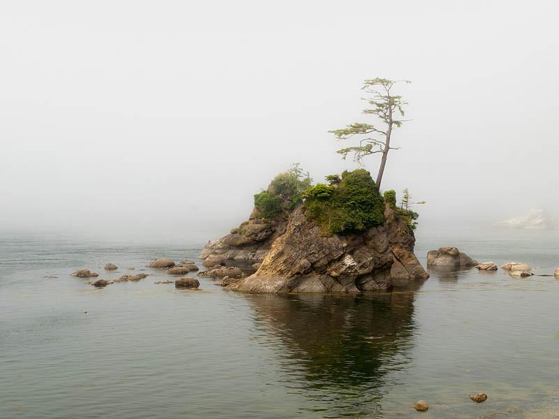 Tree on a rock near Garibaldi
