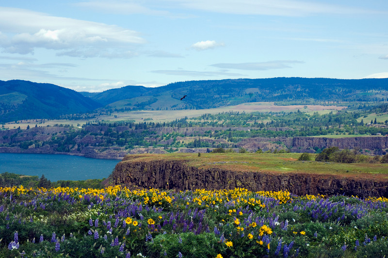 Rowena at Columbia River Gorge, Oregon