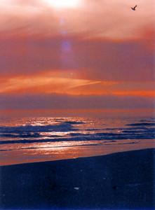 Gold Beach 254 (33128614)