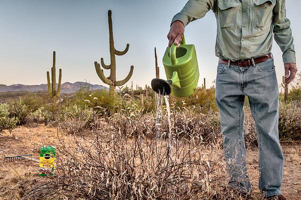 Routine desert maintenance<br /> 2017