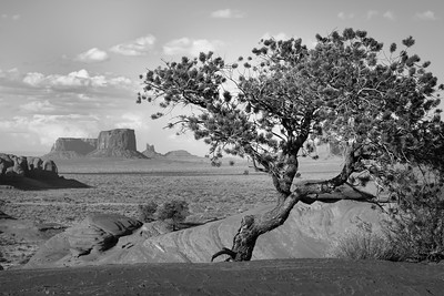 Monument Valley Juniper