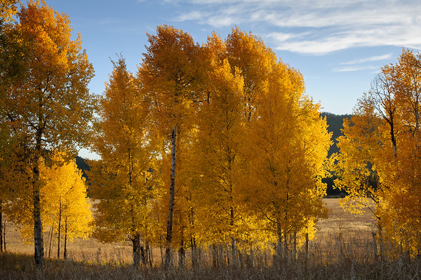 2015_Teton and Yellowstone_23722