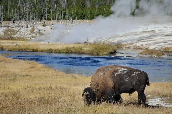 Buffalo Hot Spring