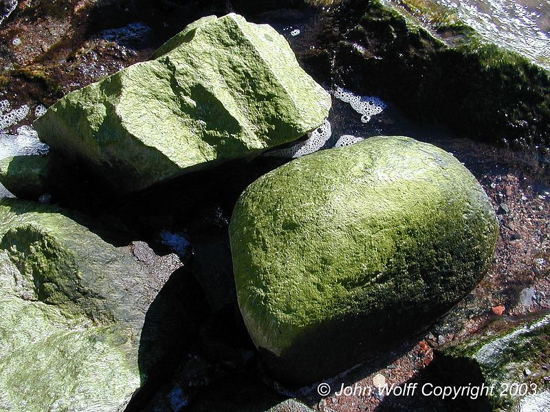 <b> Green Rocks at Baltic Seashore near Stockholm </b>