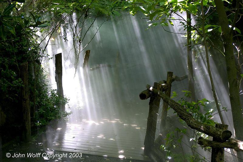 <b> Light Beams, Gorilla Exhibit at the Bronx Zoo </b>