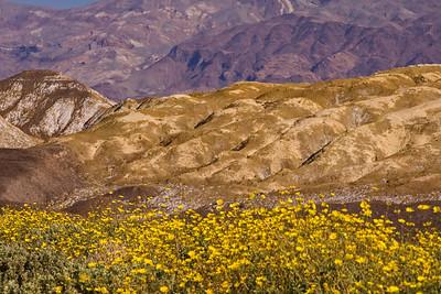 Hill-Flower